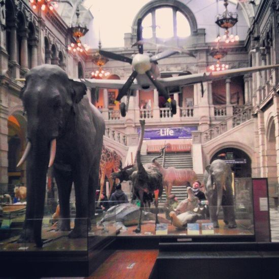 Evo3d Kelvingrove Art Gallery museum plane elephant