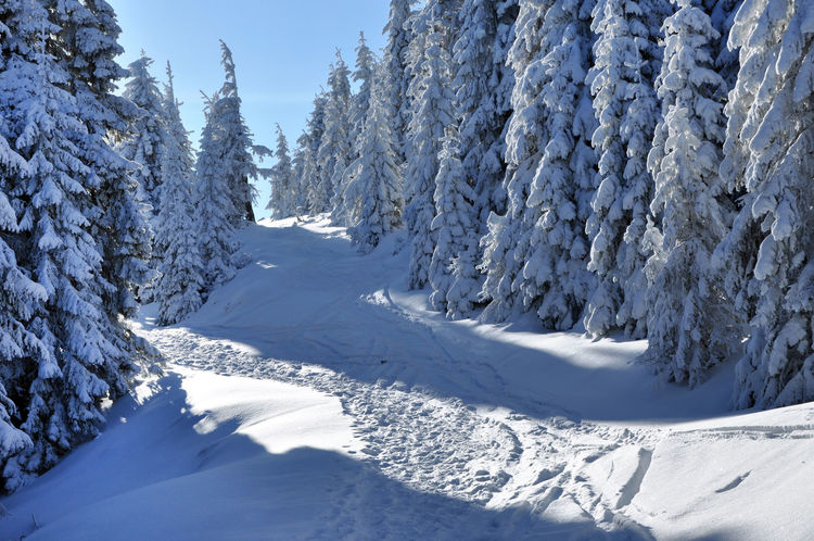 Winter landscape with snow covered fir trees Beauty In Nature Blizzard Cold Temperature Day Fir Trees Forest Frozen Landscape Mountain Nature No People Outdoors Rime Scenics Snow Snow Covered Trees Snowy Snowy Landscape Snowy Mountains Snowy Trees Spruce Sunny☀ Vista Winter Wonderland