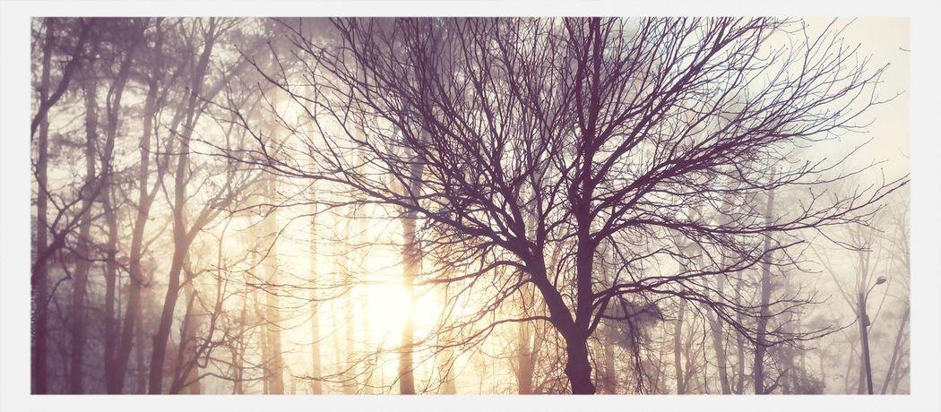 Sunlight through the trees.