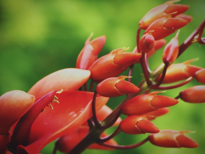 Rote Blume Red Fruit Close-up Plant Food And Drink Green Color Flower Head In Bloom