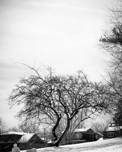 Nyc Winter NYC City Life Queens NYC City Weather NYC Street Photography NYC Photography My City Beauty In Nature Blackandwhite Bird Tree Snow Winter Bare Tree Flying Cold Temperature Silhouette Sky Single Tree Patchwork Landscape