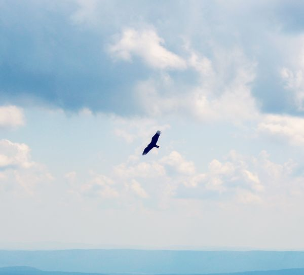 Eagle Soaring on Mt. Magazine Eagle Blue Sky Distant View Distant Mountains Distant Horizon Nature Photography Serenity In Nature On The Wind Go Higher