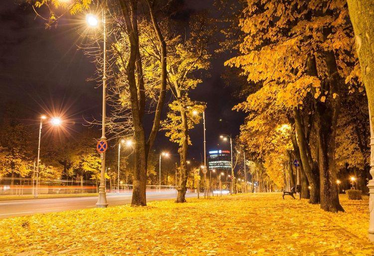 Illuminated street lights in park at night