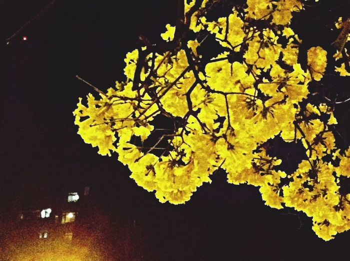 Savassi Night Photography Tree Flower