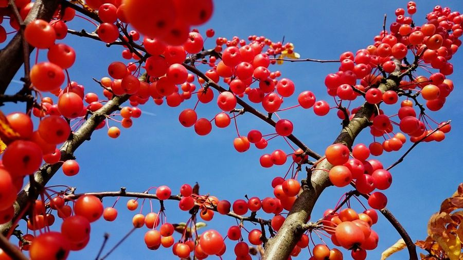 Autumn Autumn Colors Naturelovers My Smartphone Life Colors Hintergrundgestaltung Beeris EyeEm Nature Lover