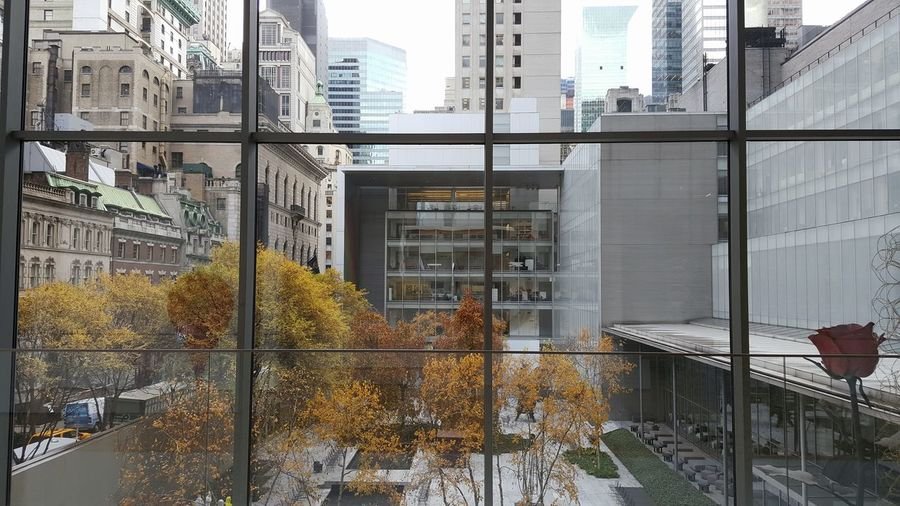Manhattan Moma N.Y. New York New York City Architecture Building Exterior Built Structure City Day Gallery Moma No People Outdoors Tree Window