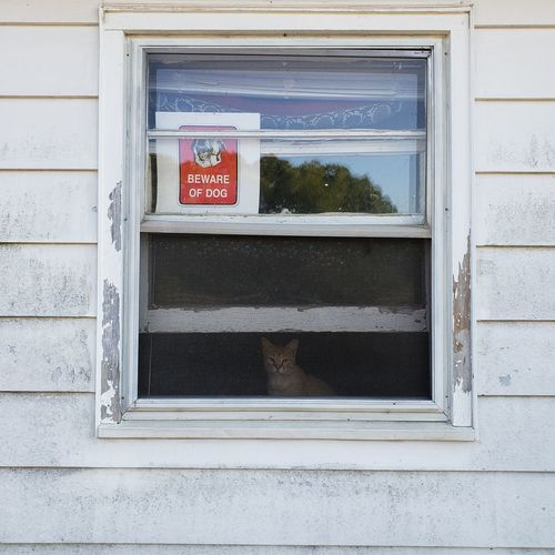 Beware Beware Of Dog Window Cat Animal Sign Eeyem Photography Tadaa Community Indoors  Text Architecture Close-up Built Structure Information
