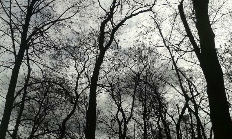 Hello ❤ Where's Spring Sad :( I Want SUMMER!   Sky And Trees Bye World