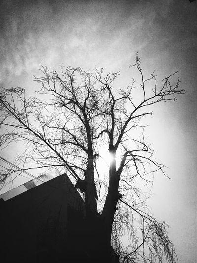 Blackandwhite Tree Branches Shootermag Lookingup Get Lost