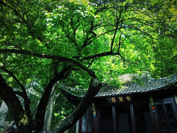"""This is a famous scenic spot in china,with Ouyang xiu' s historic:""""designed's sake,care between landscape""""as an ornament Trip Photo Old Building  China Culture China Style Trees And Sky Green Nature Taking Photos Green Plant Colour Of Life"""