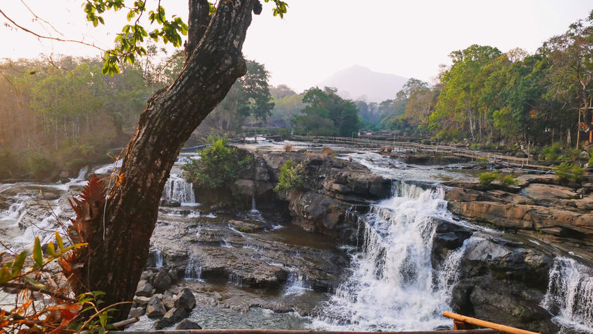 Laos, Bolavenplateau, Tad Lo Waterfall Bolavenplateau Tad Lo Waterfall Beauty In Nature Day Environment Forest Land Laos Laos, Lao Trip Nature No People Outdoors Plant Rocks Scenics - Nature Stone Material Tranquil Scene Tranquility Tree Water Waterfall