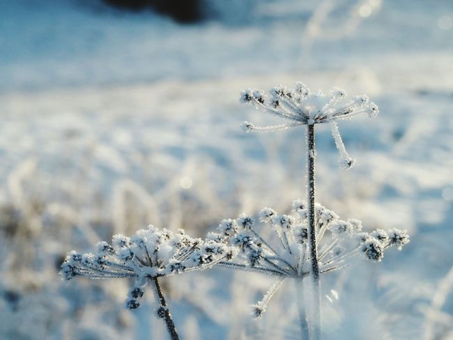 Winter Naturephotography Nature Beauty Ice Crystals Iced Winter Nature Day Frozen Nature Cold Weather Cold Temperature Beautiful Nature Frozen Plant Snow Covered One Animal Animals In The Wild Animal Wildlife Close-up Animal Themes Day Nature Fragility Outdoors