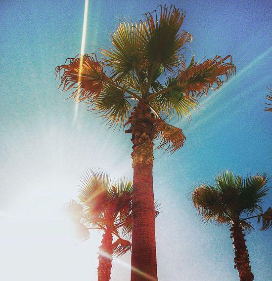 IPhoneography Viña Del Mar Reñaca Palmeras Palm Trees Light Sun