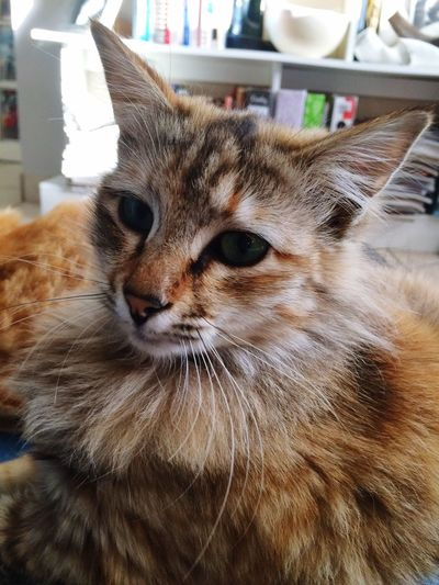 Cat 🐱 fur coat fluffy kitten