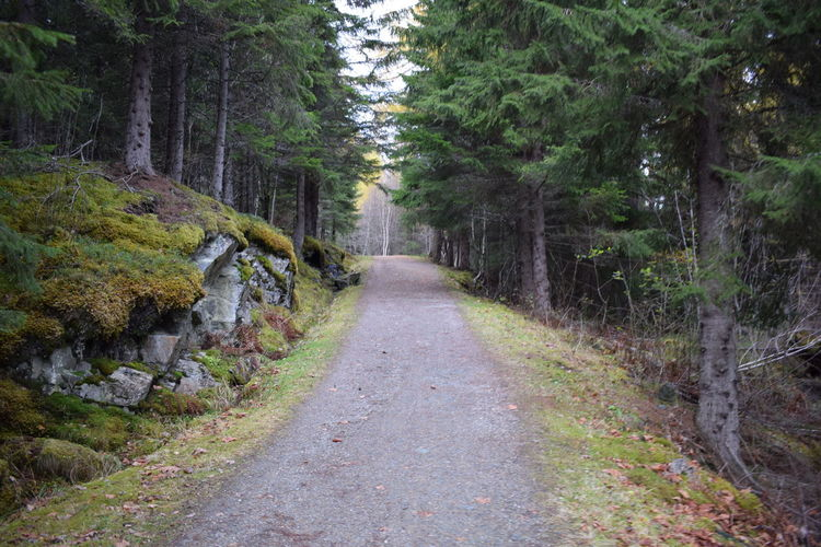 Way to the hills, Trondheim, Norway. Pathway Up Forest Path Rocks Forest Photography Tree Plant Forest Direction The Way Forward Road Land Tranquility Nature No People Footpath Tranquil Scene Beauty In Nature Growth Day Non-urban Scene Scenics - Nature WoodLand Outdoors Way Up In The Mountains