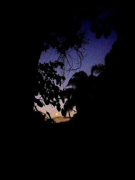 TakeoverContrast Overnight Success Sky Moon Florest