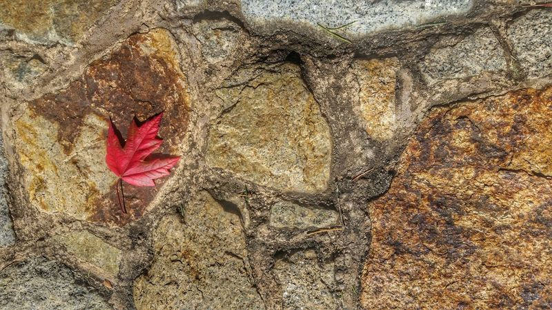 Full Frame Backgrounds No People High Angle View Red Day Sand Close-up Outdoors Beauty In Nature Autumn Nature Leaf Stone Contrast