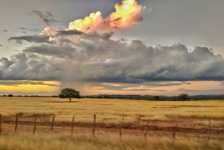 Agriculture Rural Scene Nature Cloud - Sky Sky Yellow Gold Colored No People Sunset Day Summer Nature Sertão Perspectives On Nature