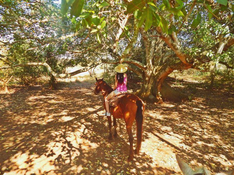 Hello World Mato Grosso Do Sul Bonito - MS Paraisonatural Cute Pets Travelling Check This Out