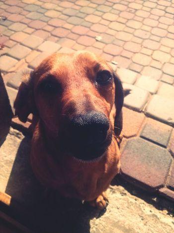 Dogoftheday My Lovely Dog Follow4follow Dogs awww :-*
