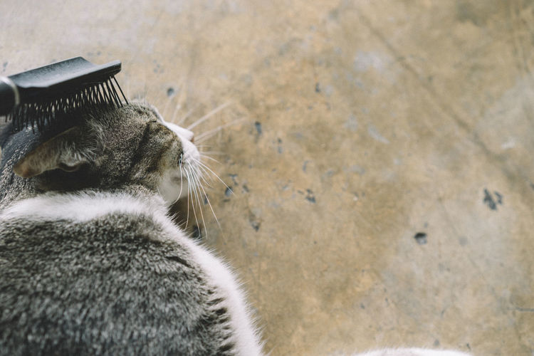 Animal Themes Close-up Day Domestic Animals Domestic Cat Feline Mammal Nature No People One Animal Outdoors