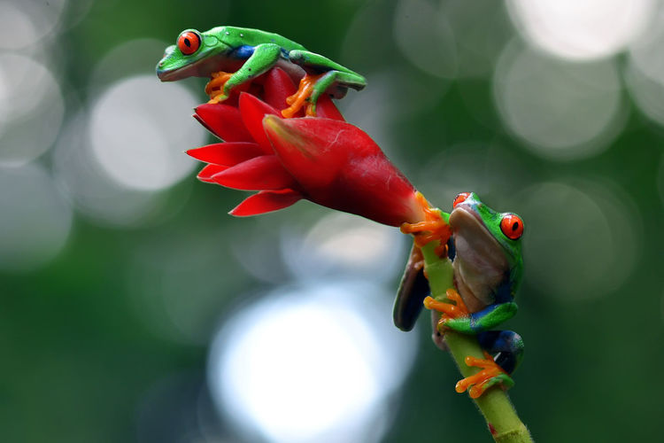 Always Proud of Small World and Macro Photography of Indonesia Animal Themes Animal Wildlife Animals In The Wild Beauty In Nature Bird Close-up Day Flower Flower Head Focus On Foreground Fragility Freshness Green Color Nature No People One Animal Outdoors Perching Red First Eyeem Photo