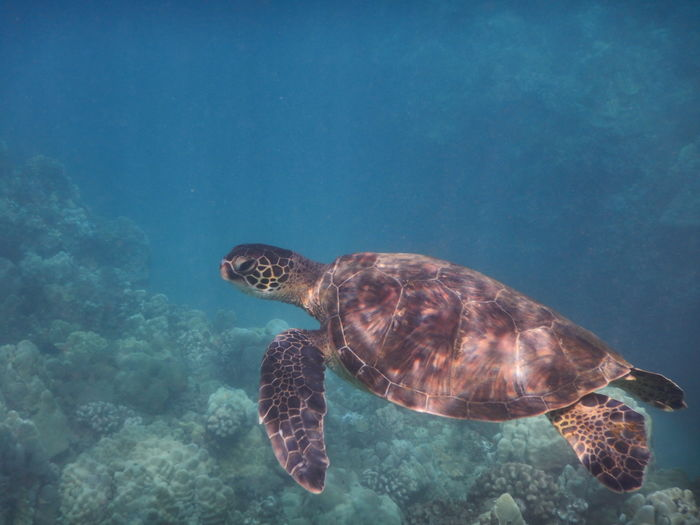 Side view of turtle swimming in water
