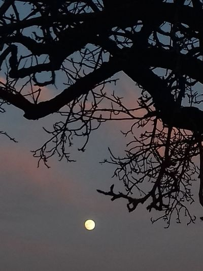 Mond Baum Abend Evening Sky Mondlicht Baum Ast Blattlos Moon Tree Branch Bare Tree Silhouette Nature Tranquility Beauty In Nature No People Sky Astronomy Night