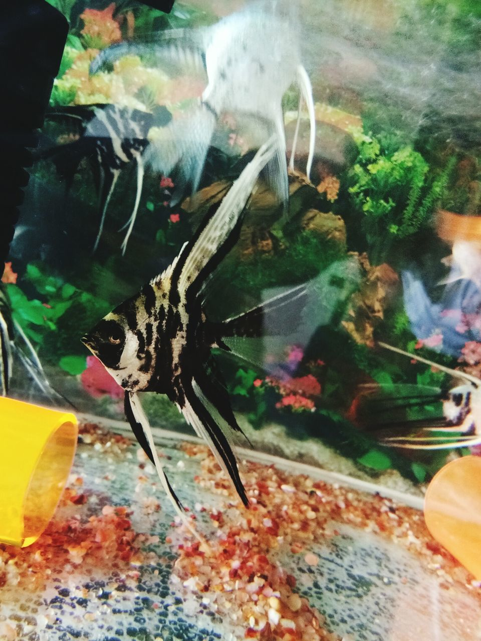 animal themes, animal, animals in the wild, animal wildlife, close-up, invertebrate, glass - material, transparent, animals in captivity, insect, one animal, no people, fish tank, indoors, water, nature, food, aquarium, lobster, marine