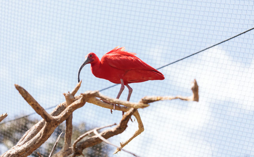 Close-up of red perching on flower against sky