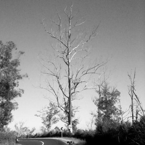 Oldtree Pohontua
