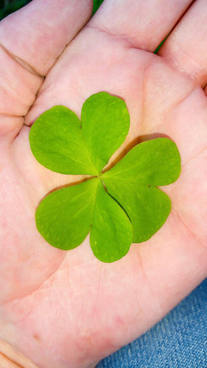 Human Body Part One Person Leaf Human Hand Holding Close-up Real People Green Color Adults Only People Insect Only Women Adult Outdoors Day Wildflowers Shamrock Good Luck Luck Of The Irish Clover Clover Leaf Mother Nature Springtime Spring Flowers Playing Outside