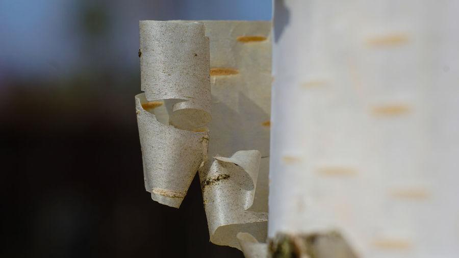 Birch bark Birch Bark Macro Photography Macro Wood Close-up