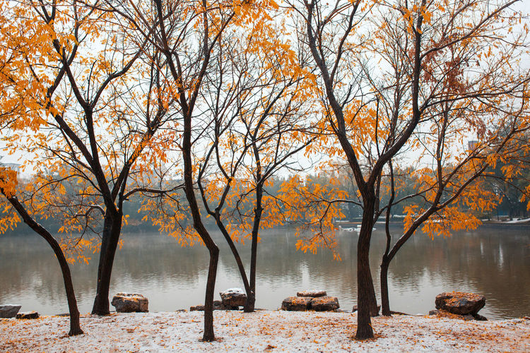 Tree Water Branch Cold Temperature Winter Beauty Bare Tree Snow Autumn Leaf
