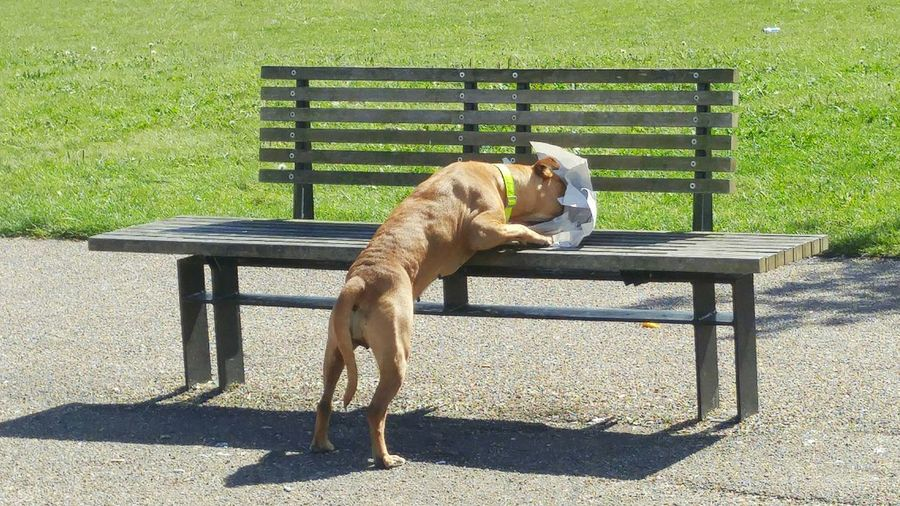 Dog eating on bench at park