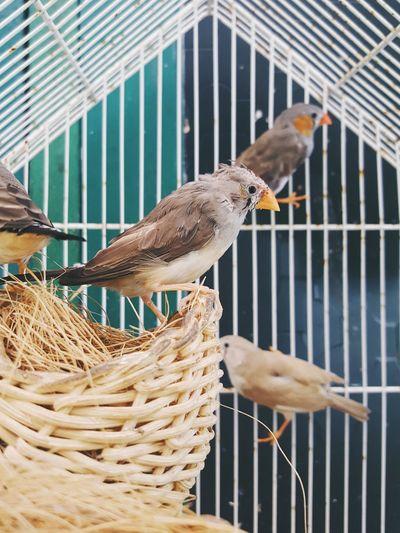 Bird Birdcage