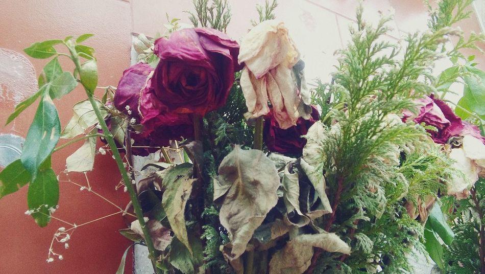 La belleza esta en donde la quieres mirar Flower