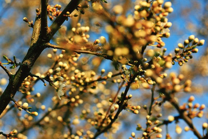 Springtime Spring Spring Has Arrived EyeEm Nature Lover Nature_collection Nature Beautiful Nature Bourgeons Flowers
