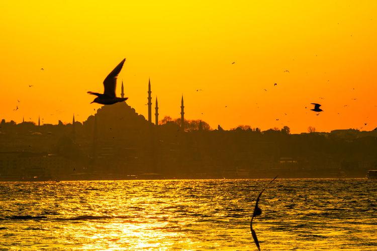 Silhouette birds flying over sea against orange sky