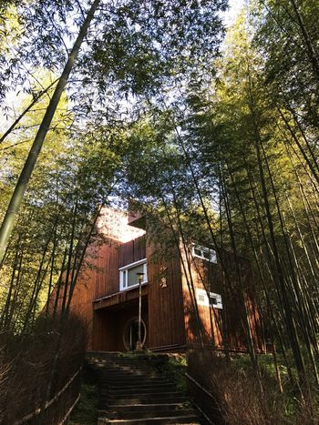 Tree Built Structure No People Outdoors Architecture The Way Forward Day Nature Building Exterior Sky Bamboo Forest Bamboo Forest Forest Photography