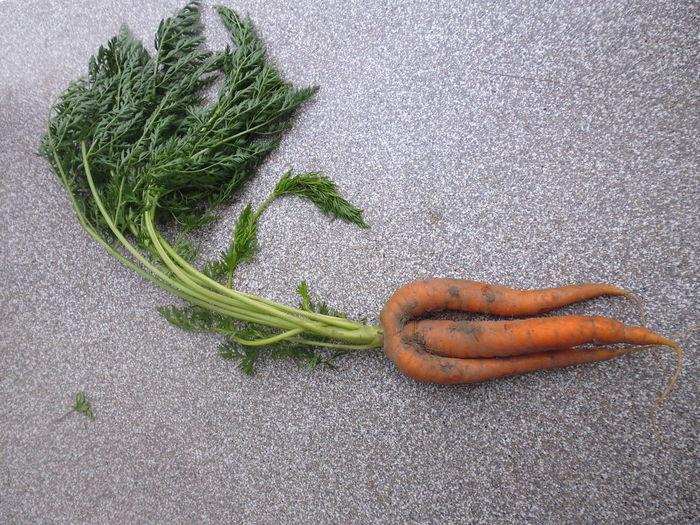 Frisur Sitzt Fönfrisur Carrots Carrot Möhre Möhren Healthy Food Laune Der Natur No People Vegan Tripod Dreibeinig High Angle View Vegetable Food And Drink No People Healthy Eating Day Indoors