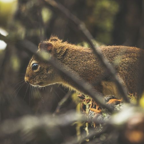One Animal Animal Themes Animals In The Wild Animal Wildlife No People Animal Body Part Outdoors Close-up Squirrel Facial Expression Expression Curious Looking Peeking Cute Hello