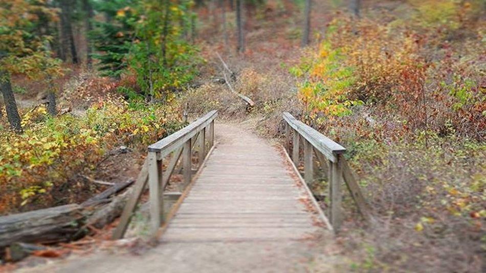 Fall in the Northwest quick TrailRun  on TubbsHill Enjoythelittlethings MakeItHappen RunningIsTheAnswer Run