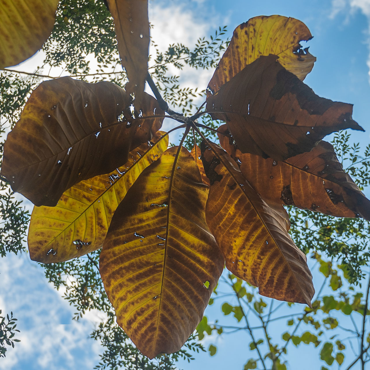 LOW ANGLE VIEW OF YELLOW LEAVES ON TREE AGAINST SKY