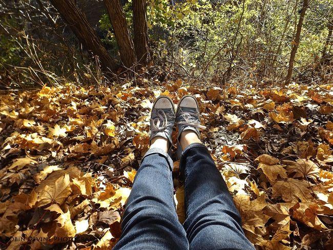 Autumn Converse Denim EyeEm Gallery Eyeemnaturelover Leaves Mothernature Relaxing Toronto The Nature Photographer - 2016 Eyeem Awards
