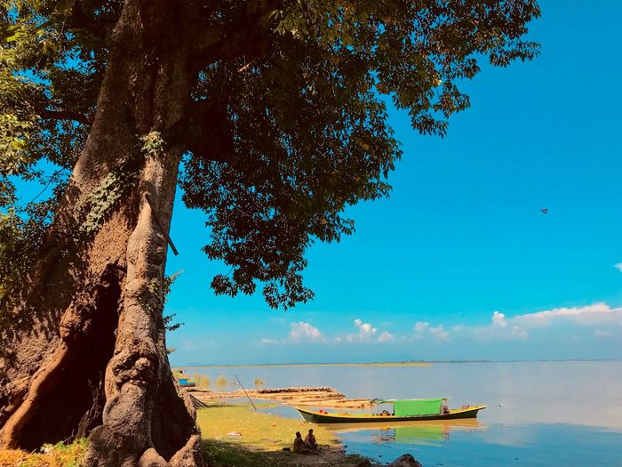 EyeEm Selects Water Sea Beach Sky Beauty In Nature Land Nature Scenics - Nature Day Tree Sunlight Blue Tranquil Scene Horizon