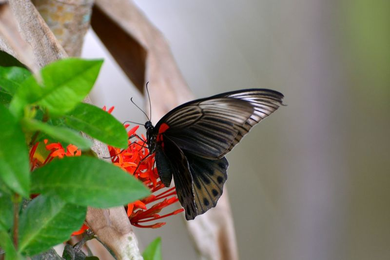 Butterfly Perching Butterfly - Insect Red Insect Leaf Animal Themes Close-up Butterfly Animal Wing Dragonfly Wild Animal