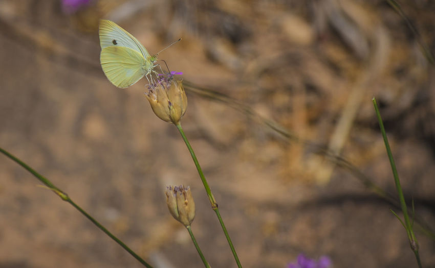 Butterfly on flower against blurred background