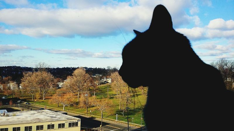 Looking Out The Window Silhouette Of A Cat Light And Shadows Silhoutte Photography Beautiful View Fall Days Eye4photography