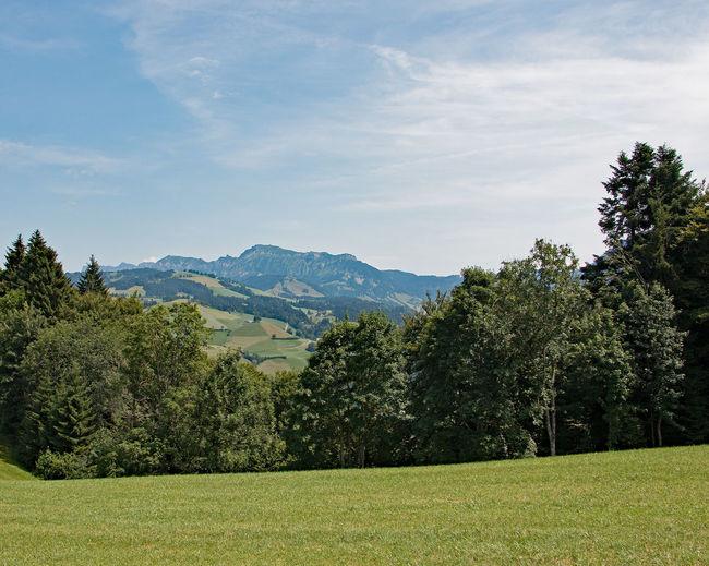 Swiss landscape, Schweizer Landschaft Beauty In Nature Cloud - Sky Day Evergreen Tree Green Color Landscape Lush - Description Mountain Mountain Range Nature No People Outdoors Scenics Sky Tree